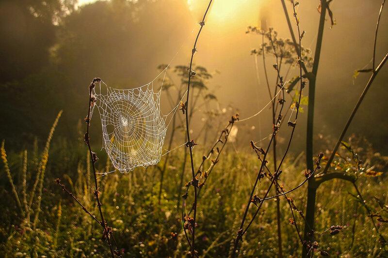 Звенит роса на паутинке