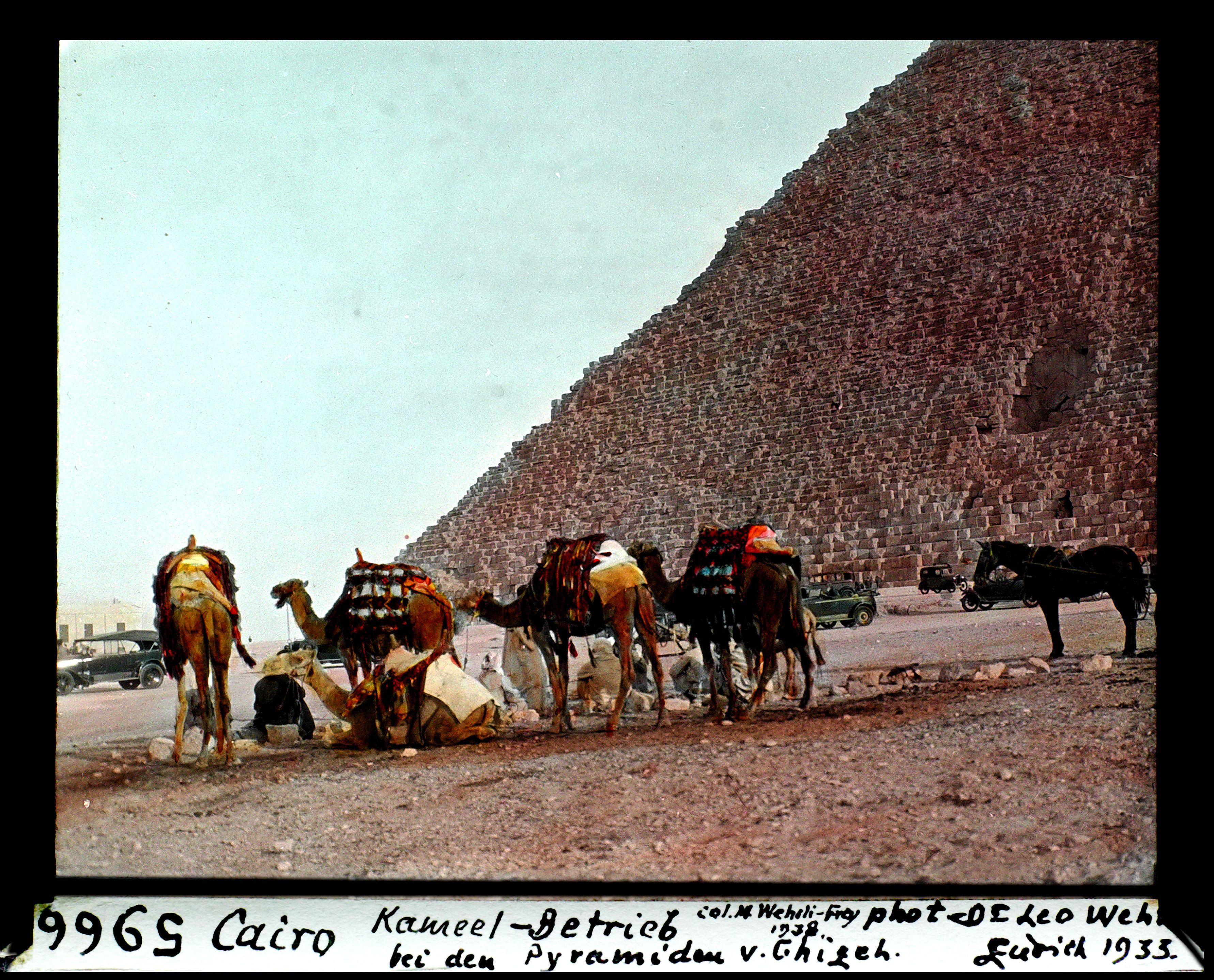 Гиза. Верблюды возле пирамиды