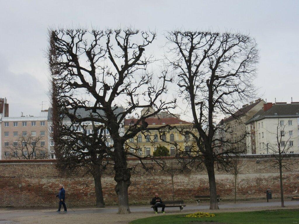 trees_silhouette_park_aesthetic_cut_square_city_vienna-1329457.jpg!d
