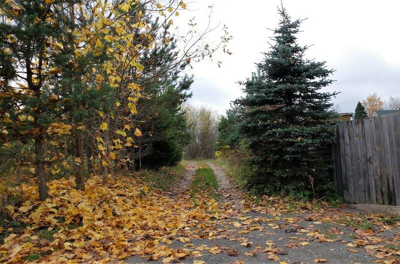 Осенние дачные фото