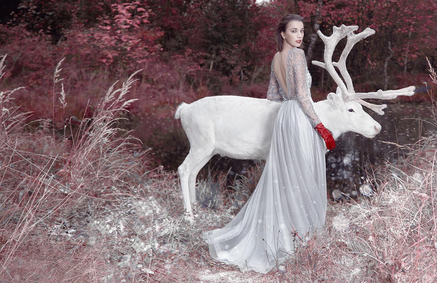 Dear deer / фото Ilona D.Veresk