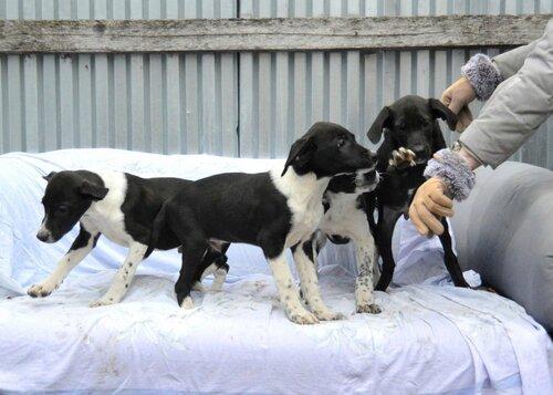 Ринго собака из приюта догпорт в добрые руки фото