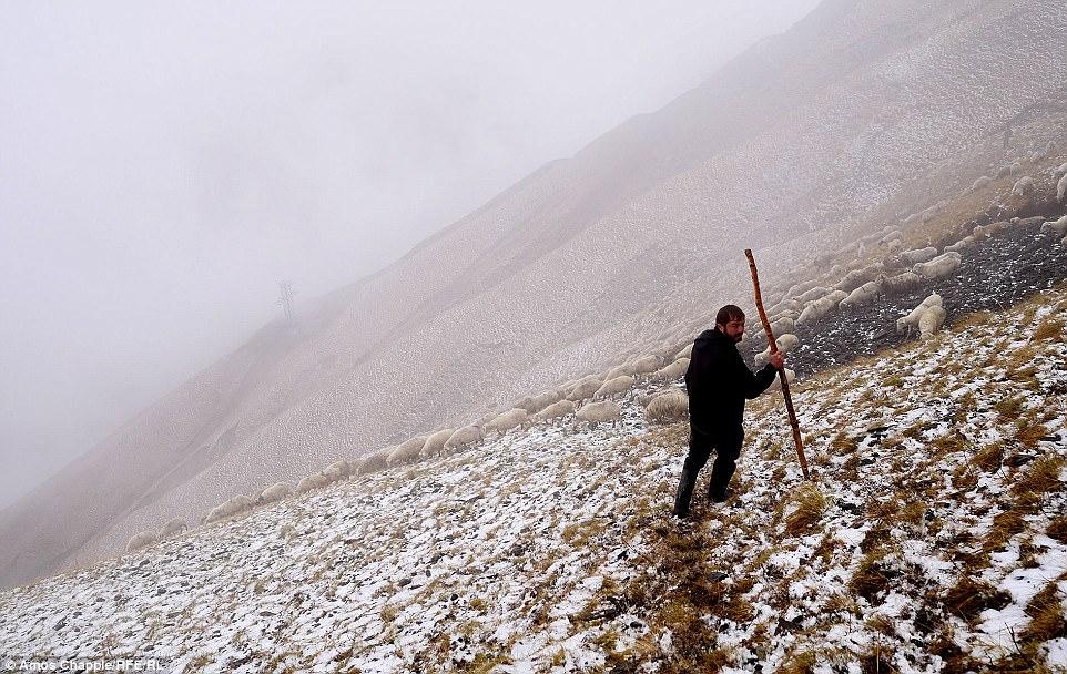 «Трава была покрыта снегом, поэтому все шли очень осторожно, — рассказывает Чаппл. — У пастухов были