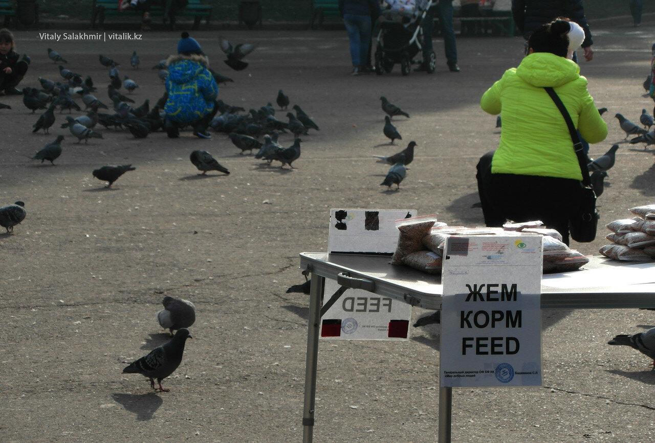Корм для голубей.
