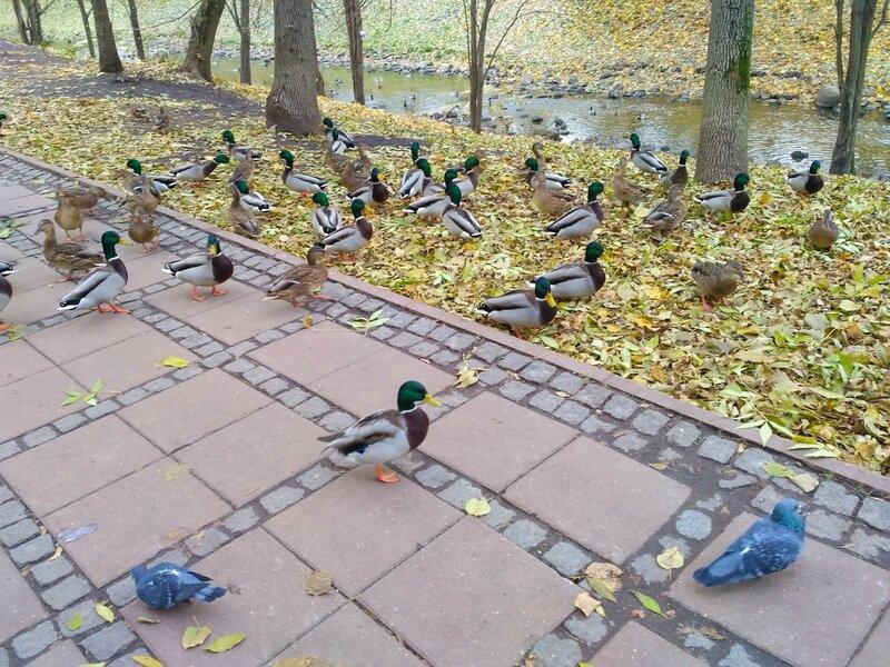 #птицы