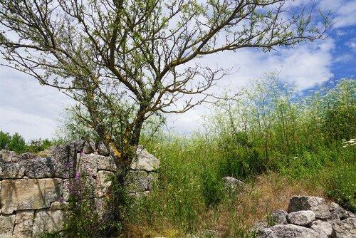 Молодое дерево на руинах