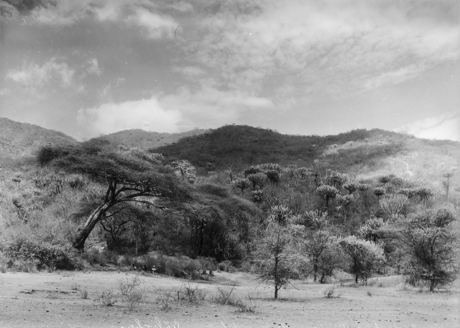 18. Пейзаж и растительность в горах Улугуру