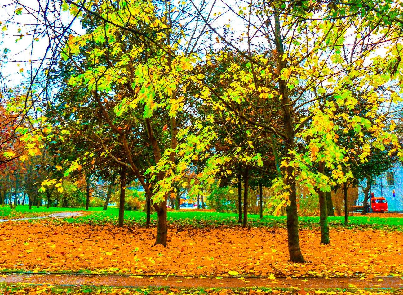 irina-fortuna-petrovsky-park 02.jpg