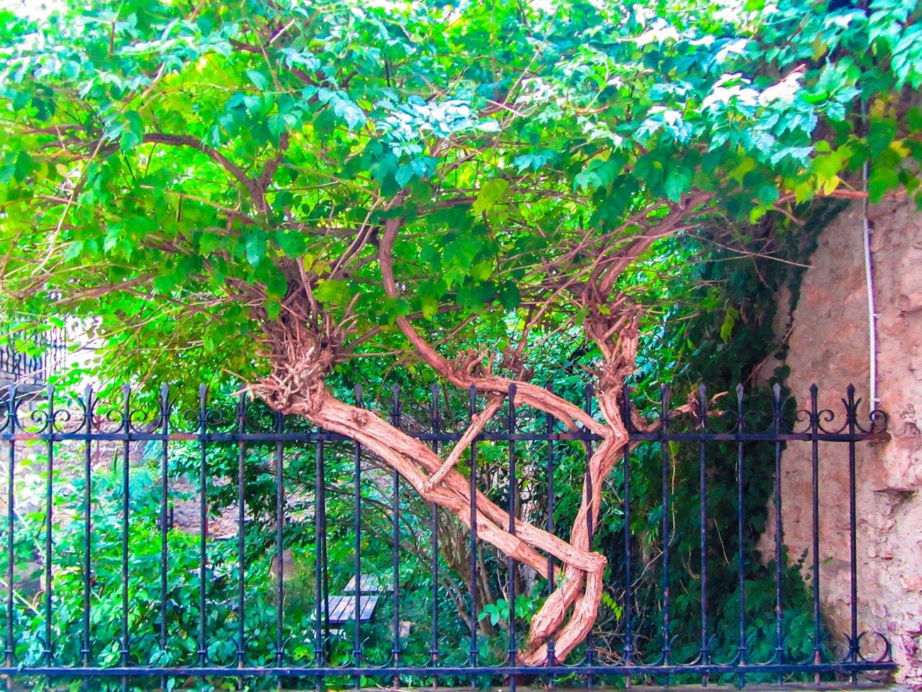 irina-fortuna-Carcassonne-france 20.jpg