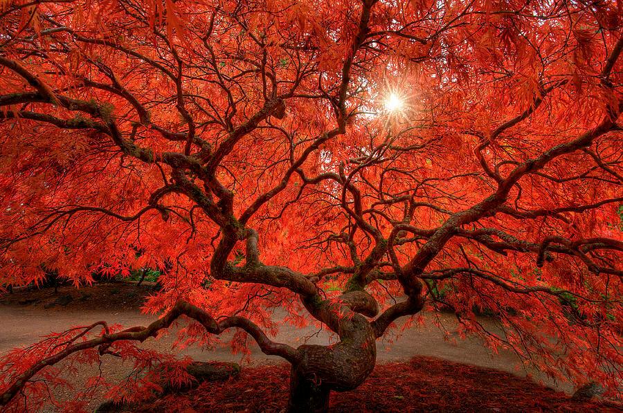red-lace-dan-mihai.jpg