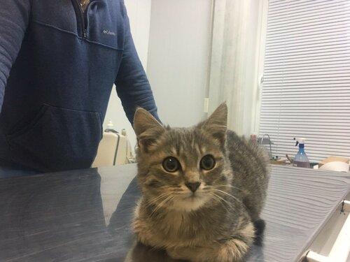 Симон кот из приюта догпорт в добрые руки фото