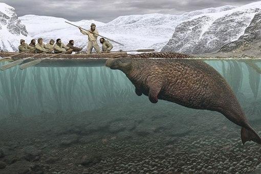 Сохраняются также несколько остатков шкуры морской коровы. Муляжи стеллеровой коровы, реконструирова