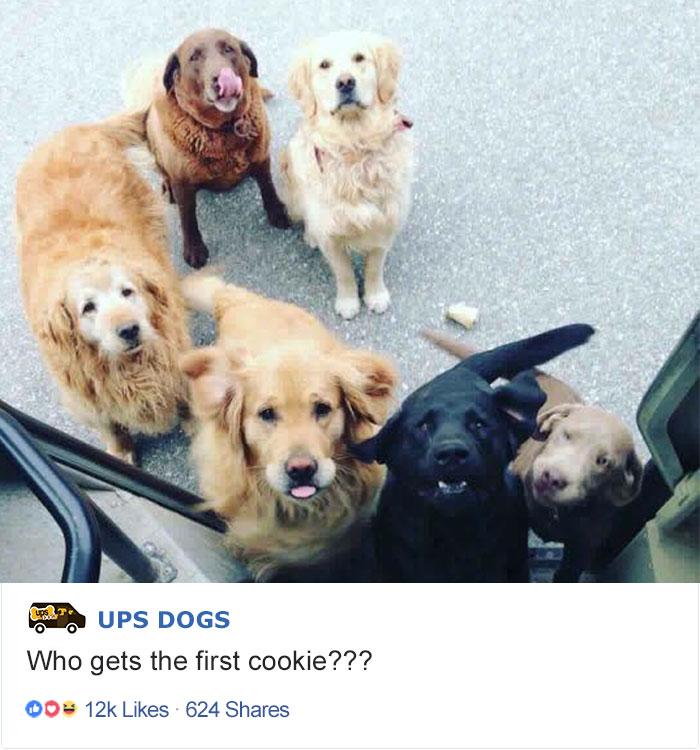 Кому первую печеньку?