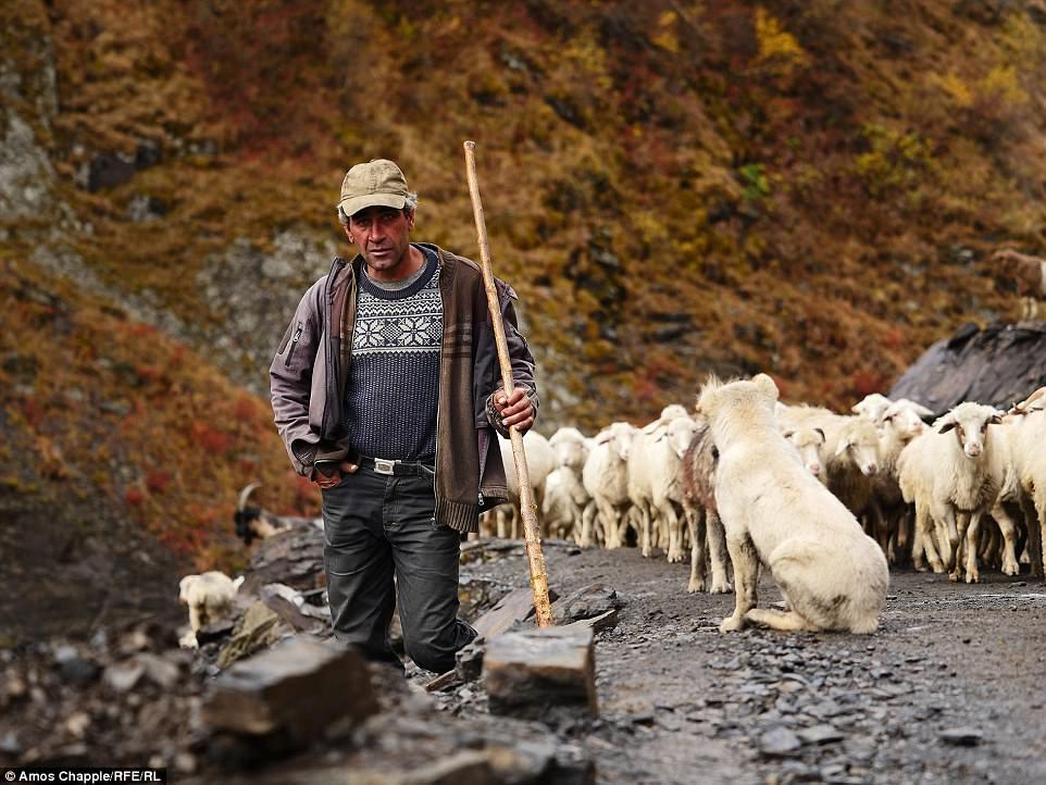 Дато Чхареули — один из шестерых пастухов, которые ведут 1000 овец через горы. В их распоряжении тол