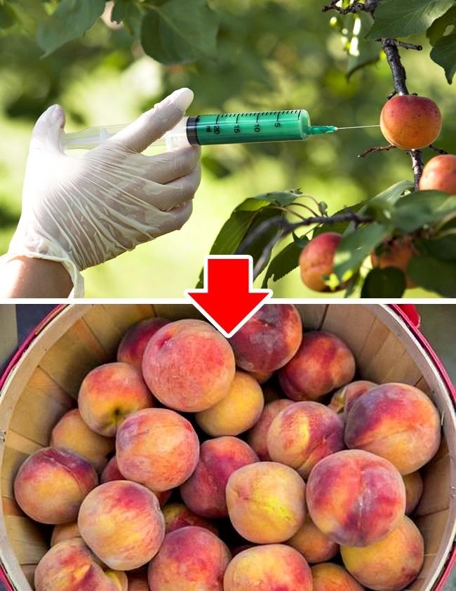 В2015 году больше половины стран Европы запретили использование ГМО. Причина запрета валлергенност