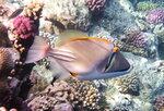 Рыба-Пикассо...DSCF8797ОВ.JPG