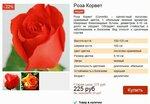 Розы Корвет.
