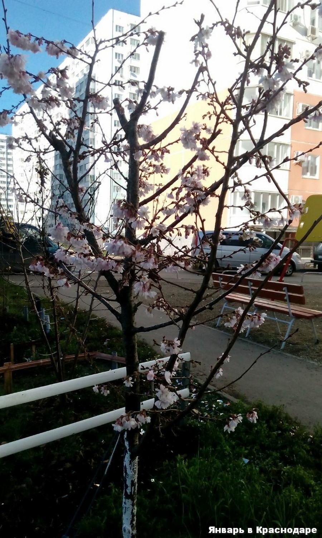 Подборка интересных и веселых картинок 12.01.18