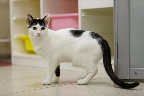 Китри кошка из приюта догпорт в добрые руки фото