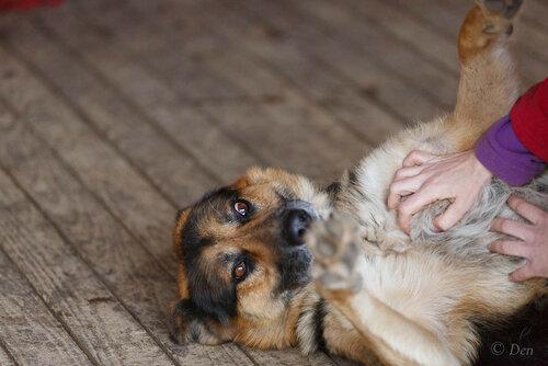 Рэкс собака из приюта догпорт фото