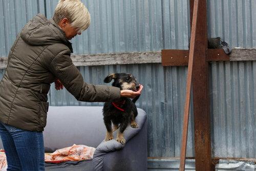 Сержик собака из приюта в москве догпорт фото