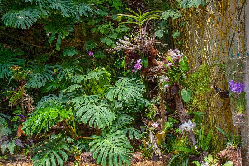 Монстера. Никитский ботанический сад