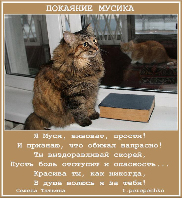 Васильков картинки, видео открытка муся и мусик