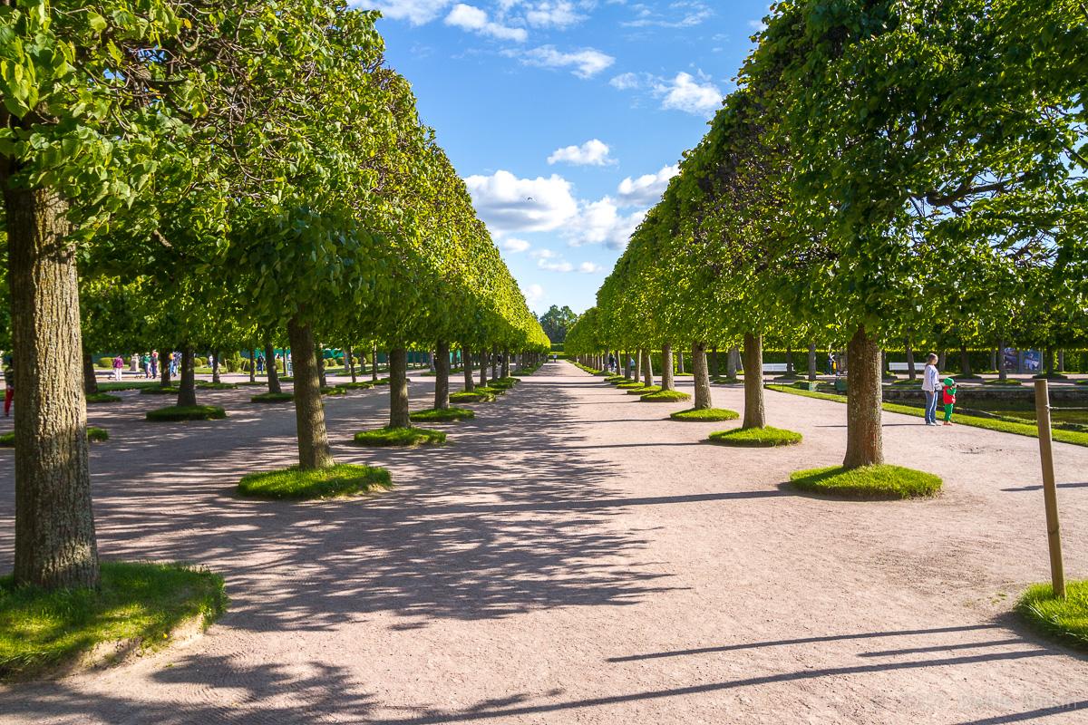 верхний сад петергоф фото 6