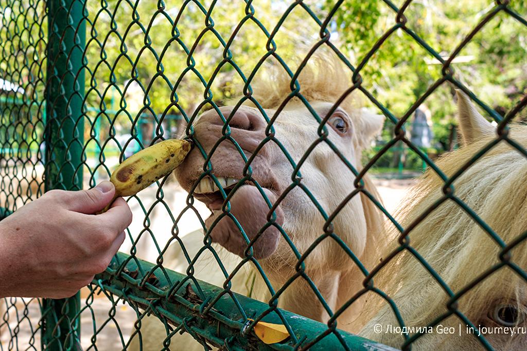 кормление коня-альбиноса в парке миллионолетних камней