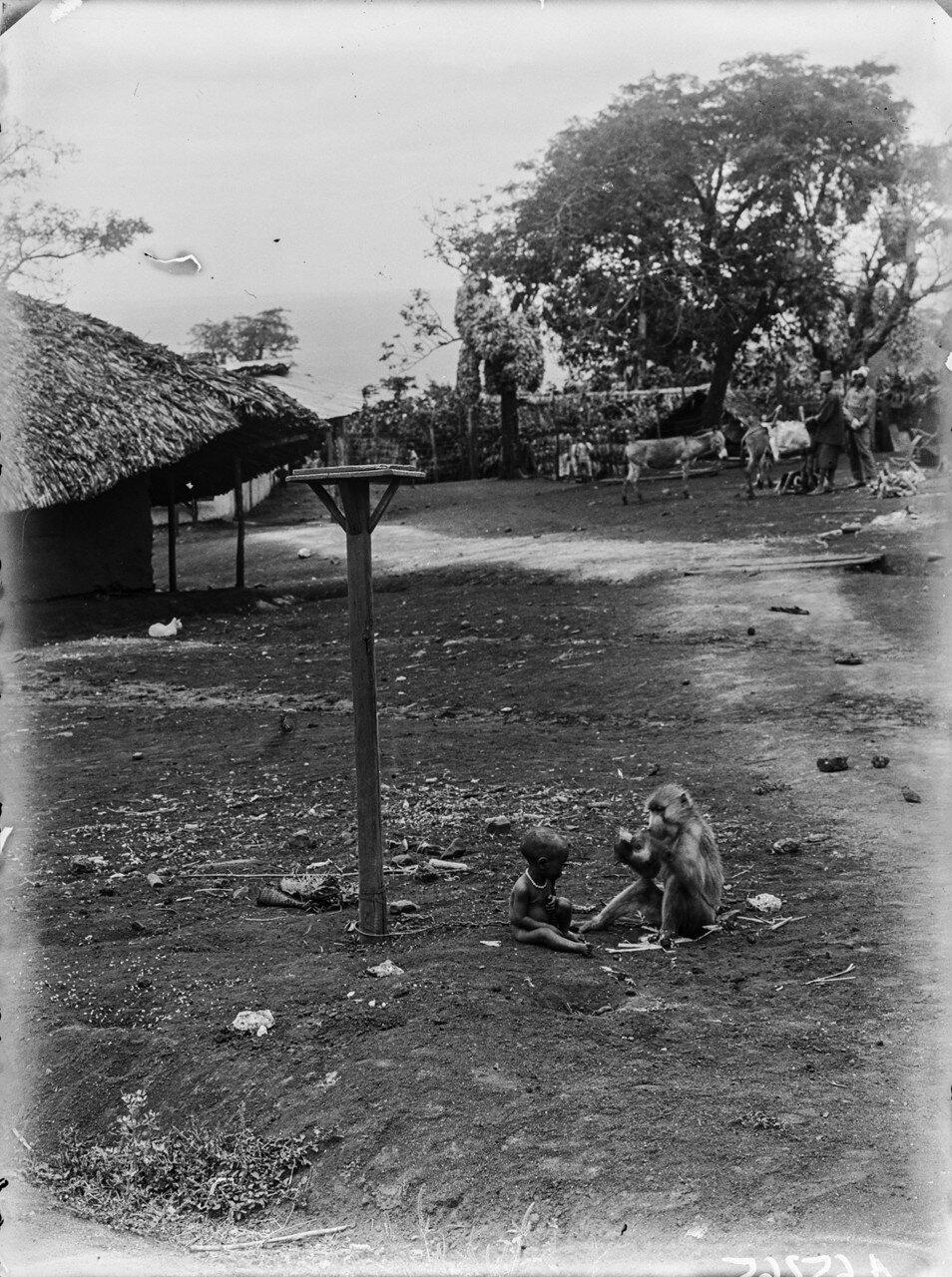 282. Станция немецкого общества Восточной Африки (ДОАГ)  в Моши. Ребенок и обезьяна