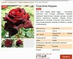 Розы. Чёрная магия.