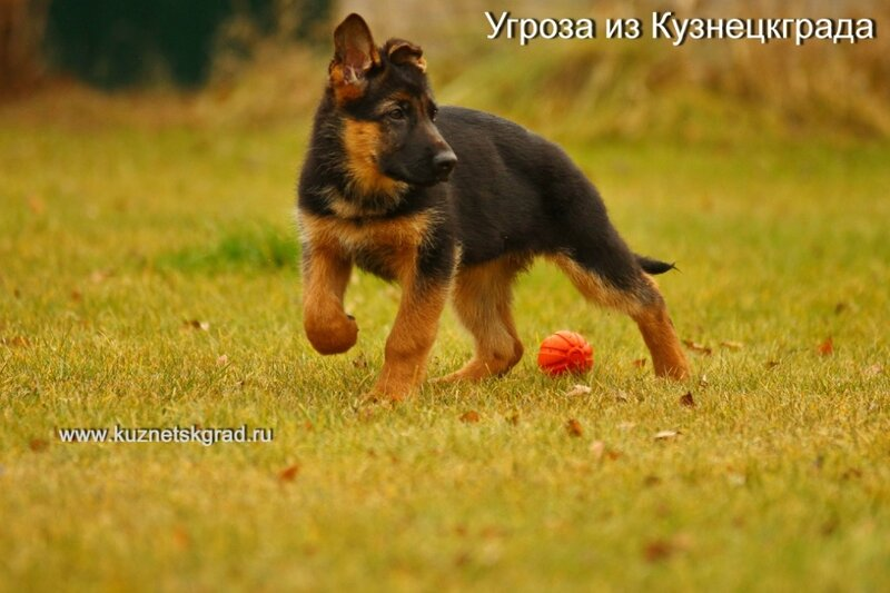 https://img-fotki.yandex.ru/get/893904/23658768.8/0_cef41_b7448922_XL.jpg