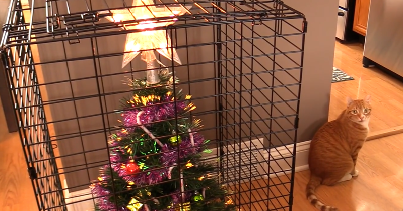 0 17a7de 6065b2c4 XL - Как защитить новогоднюю елку от кошек и детей