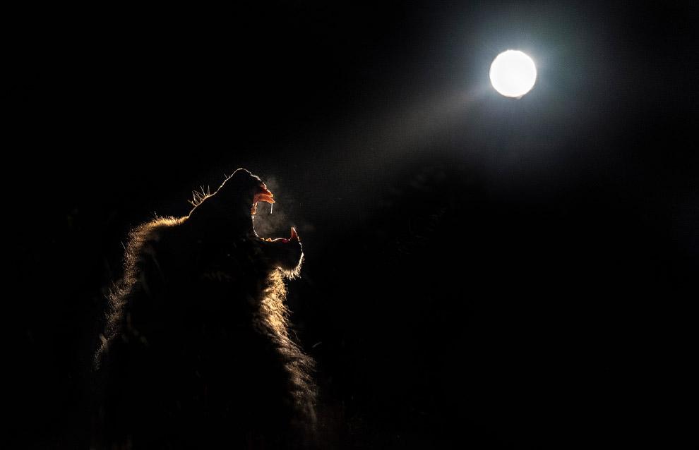 Полночное сафари