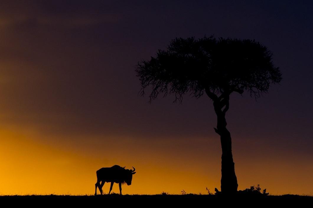 14. Закаты Масаи-Мара от Пола Гольдштейна. (Фото: Пол Гольдштейн / Rex)
