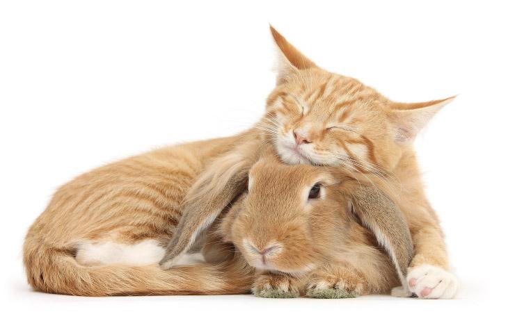 Есть ли одинаковые кошки и кролики? (13 фото)