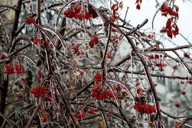 Ледяной дождь в Чебоксарах (40 фото)