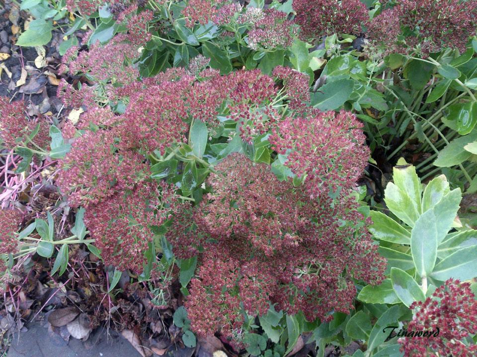 цветы-осени-43.jpg