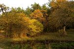 Осень в Коджори