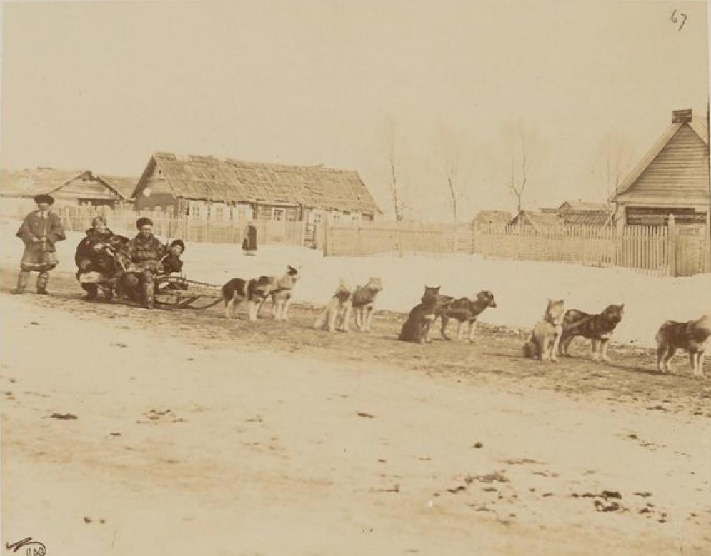Собачьи упряжки в Николаевске-на-Амуре