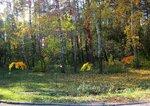 Праздник Осени солнечной