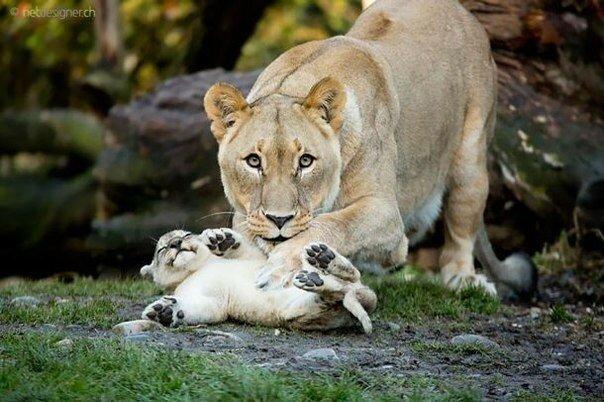 0 17a6dc 58b8c354 XL - Как животные заботятся о детенышах