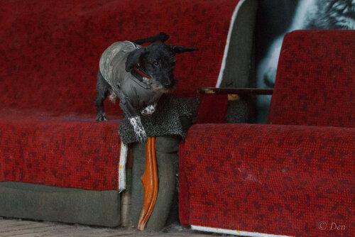 Кристофер собака из приюта догпорта фото