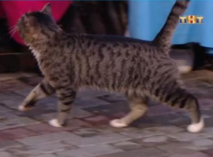 кот барсук талисман дом-2 фото
