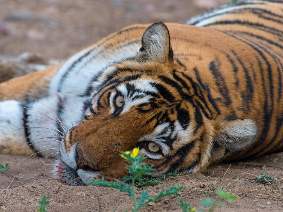 В джунглях даже белки размером с домашнего кота. Это индийская гигантская белка, она живет в верхнем