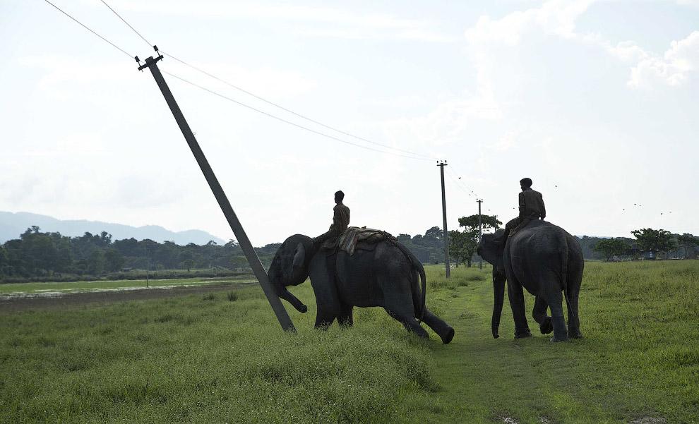 5. Слон — эффективный бульдозер. (Фото Anupam Nath):