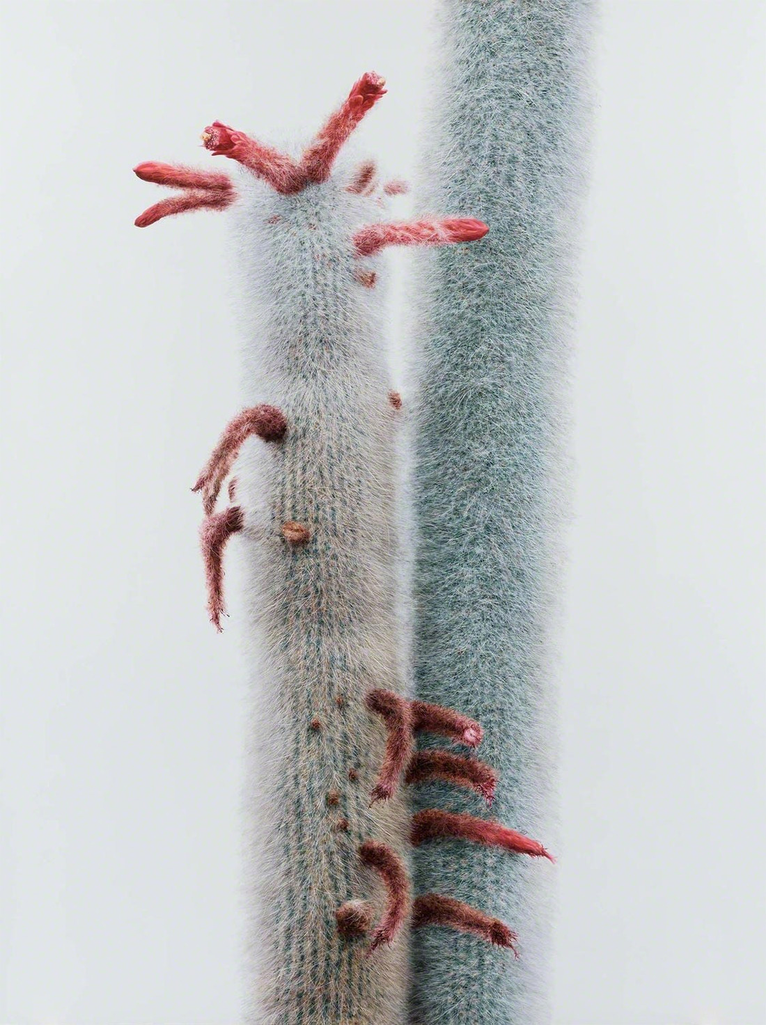 Cactus No. 92 , 2015. Oil on canvas. Courtesy Johyun Gallery.