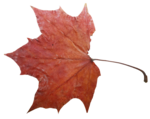 natali_14_fall_leaf18.png