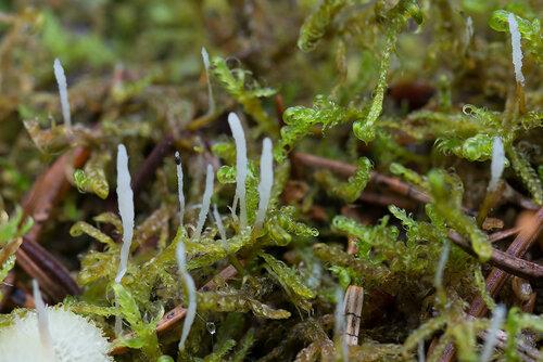 Альбом:  Грибы - Fungi Грибы разные Автор фото: Владимир Брюхов