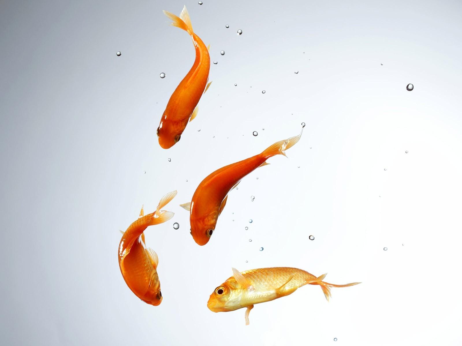 Рыба в воде обои на рабочий стол